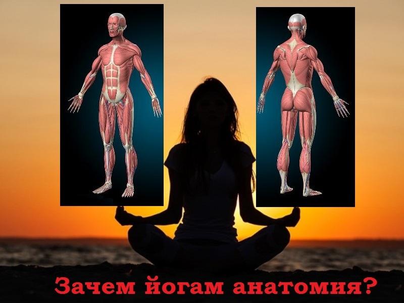 йога и анатомия
